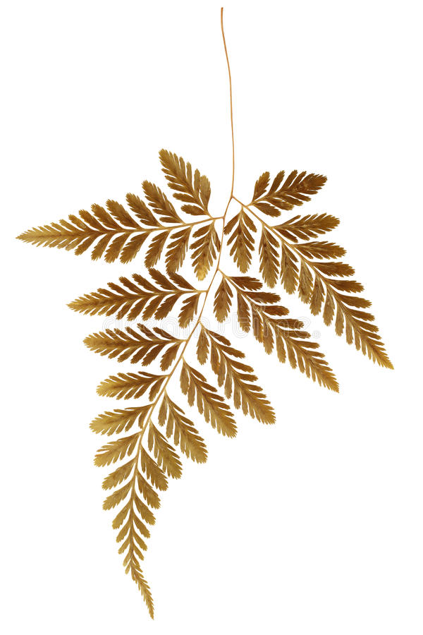 Trockener Fern Leaf stockfotografie