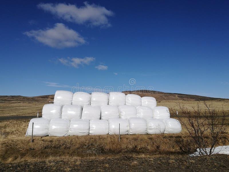 Trockener Heuballen in der weißen Plastiktasche, Landwirtschaftsfeld auf sonnigem Himmel, ländliche Natur im Ackerland, Stroh auf stockfoto