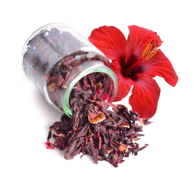 Trockener Hibiscustee im Glasgefäß mit Blume Lokalisiert auf weißem BAC stockfotos