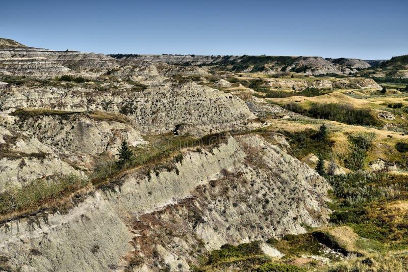 Trockener Insel-Büffel springen provinziellen Park Alberta lizenzfreie stockfotos