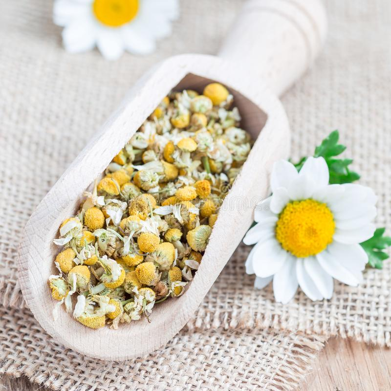 Trockener Kamillentee in der hölzernen Schaufel, frische Kamille blüht auf Hintergrund, quadratisches Format lizenzfreie stockfotos