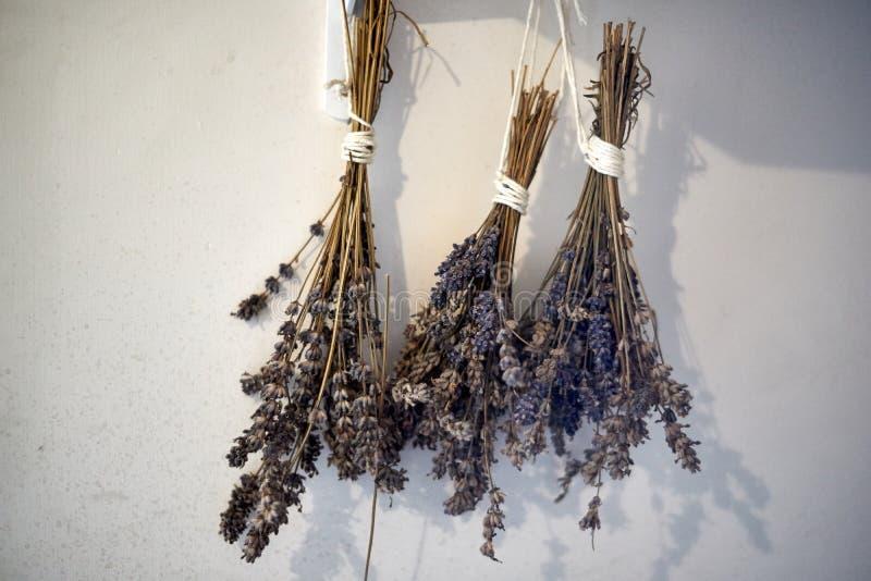 Trockener Lavendel der Weichzeichnung, der in der weißen Wand hängt Abschluss oben stockfoto