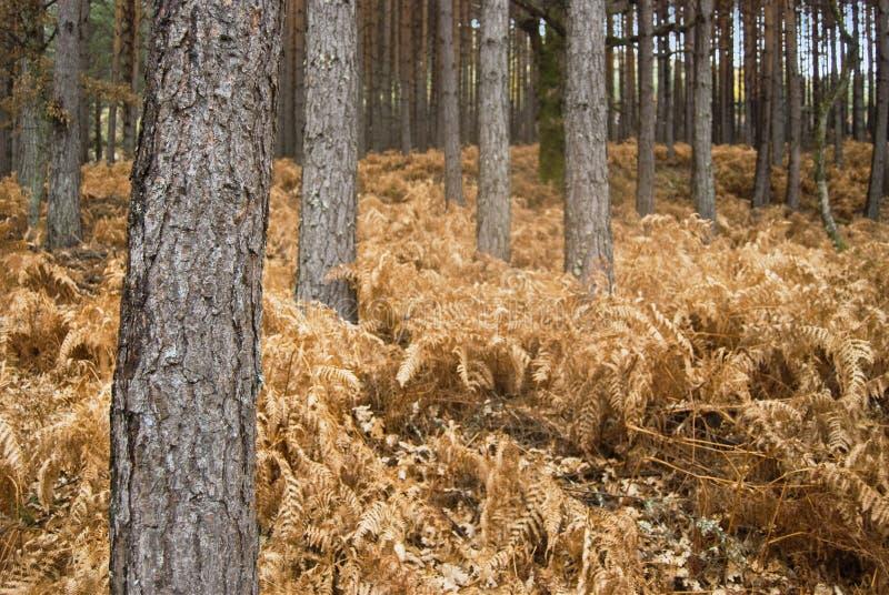 Trockener Wald stockfoto