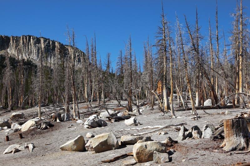 Trockener Wald lizenzfreies stockbild