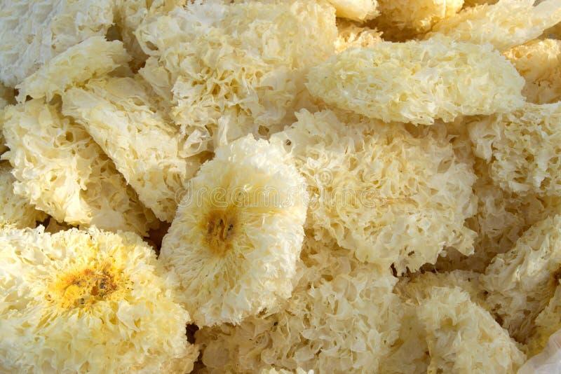 Trockener weißer Pilz lizenzfreies stockbild