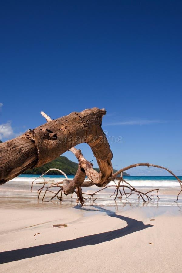Trockener Zweig auf dem Strand lizenzfreies stockfoto