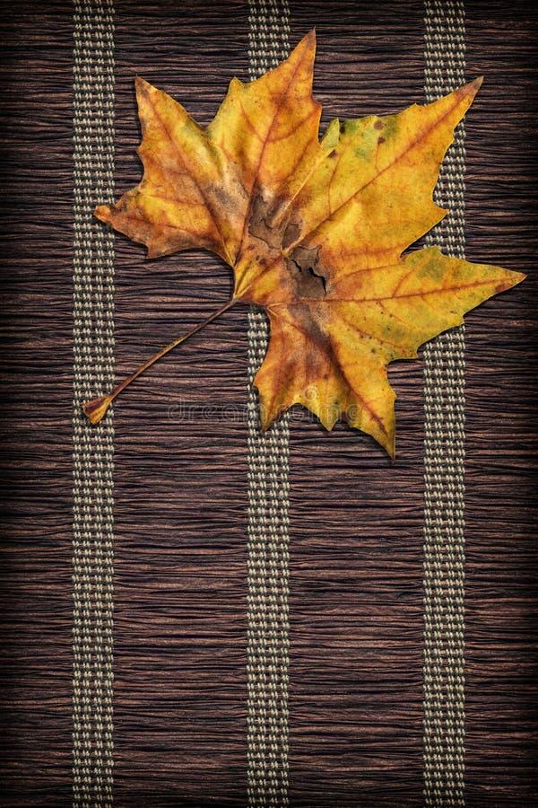 Trockenes Ahornblatt auf Braun flocht rustikalen vignetted Hintergrund des Papierpergaments stockfoto
