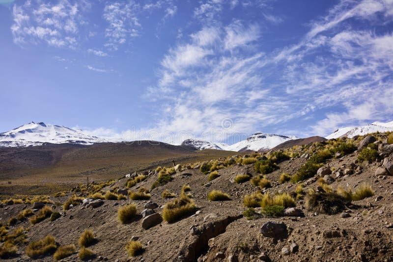 Trockenes Atacama-Wüsten-Gelände und Schnee mit einer Kappe bedeckte Anden-Spitzen lizenzfreies stockbild