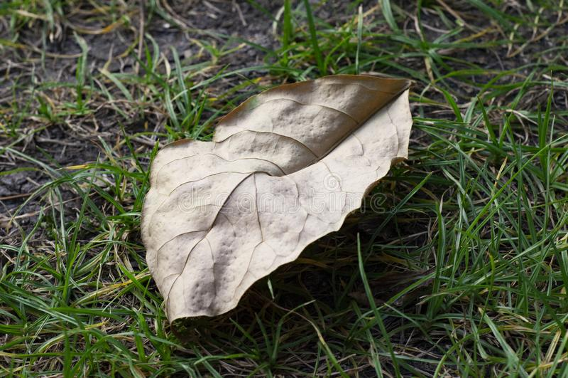 Trockenes Blatt auf Gras lizenzfreie stockfotos