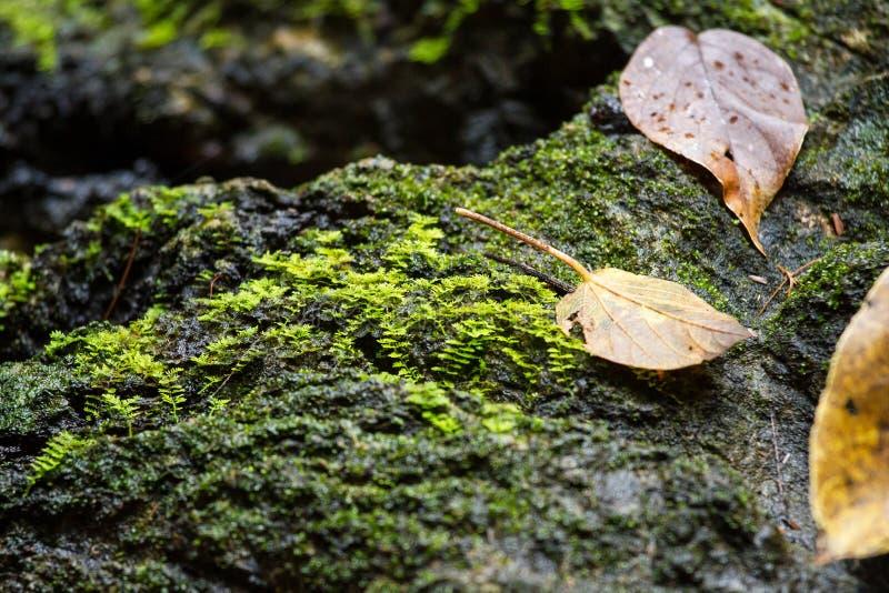 Trockenes Blatt auf Stein mit grünem MOS stockbilder