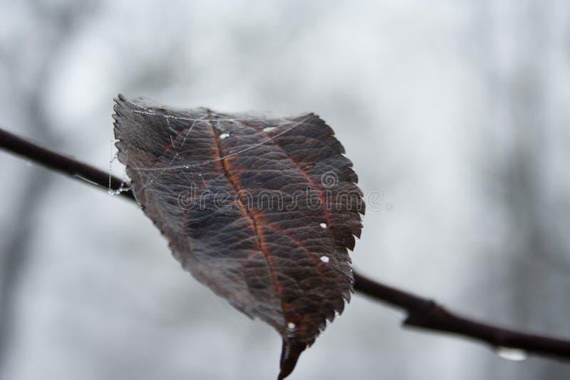 trockenes Blatt, das an einem Baumast hängt Düstere Ansicht über einen Herbstmorgen lizenzfreie stockbilder