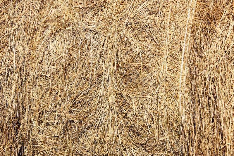 Trockenes gelbes Heu, Stroh, Gras, Hintergrundbeschaffenheit lizenzfreies stockbild