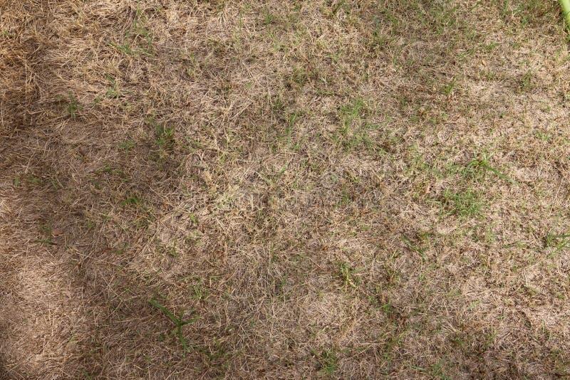Trockenes Gras lizenzfreie stockbilder