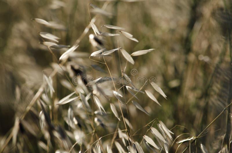 Trockenes Gras stockfoto