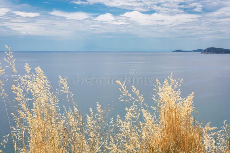 Trockenes Gras auf blaues See- und des bewölkten Himmelshintergrund Ansicht vom H?gel lizenzfreie stockfotografie