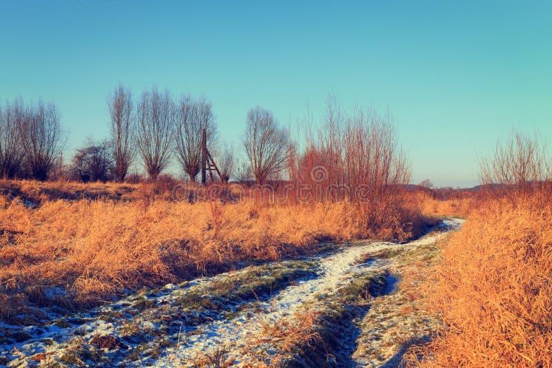 Trockenes Gras-Feld lizenzfreie stockfotos