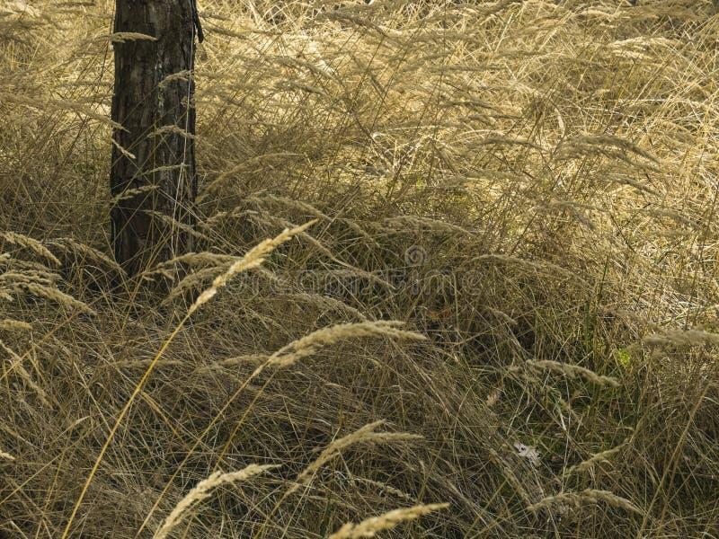 Trockenes Gras im Wald lizenzfreies stockbild