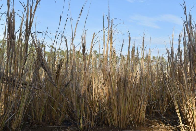 Trockenes Gras im Wald stockfotografie