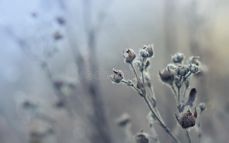 Trockenes Gras im Winter stockfoto