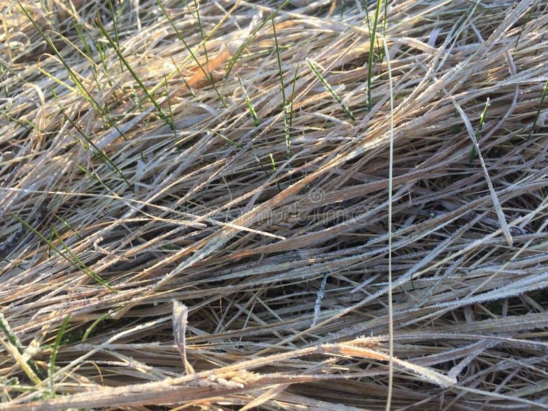 trockenes Gras mit etwas grünem jungem Gras lizenzfreie stockbilder