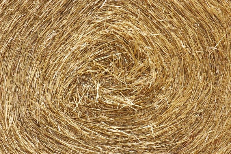 Trockenes Gras oder Futter für Viehbestand lizenzfreie stockfotos