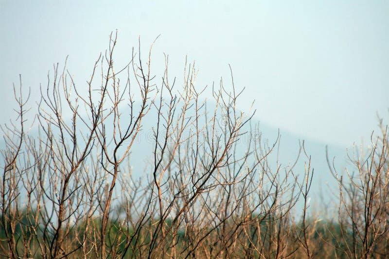 Trockenes Holz auf Blau stockfotografie