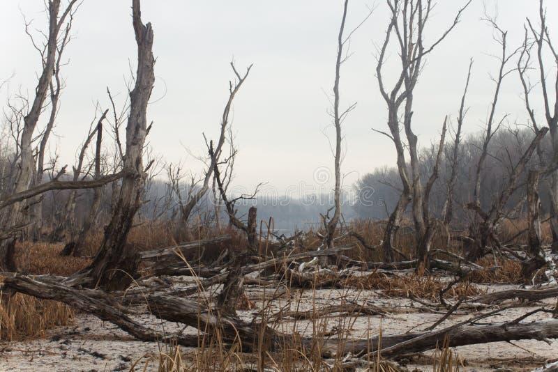 trockenes Klima bei Thailand lizenzfreies stockbild
