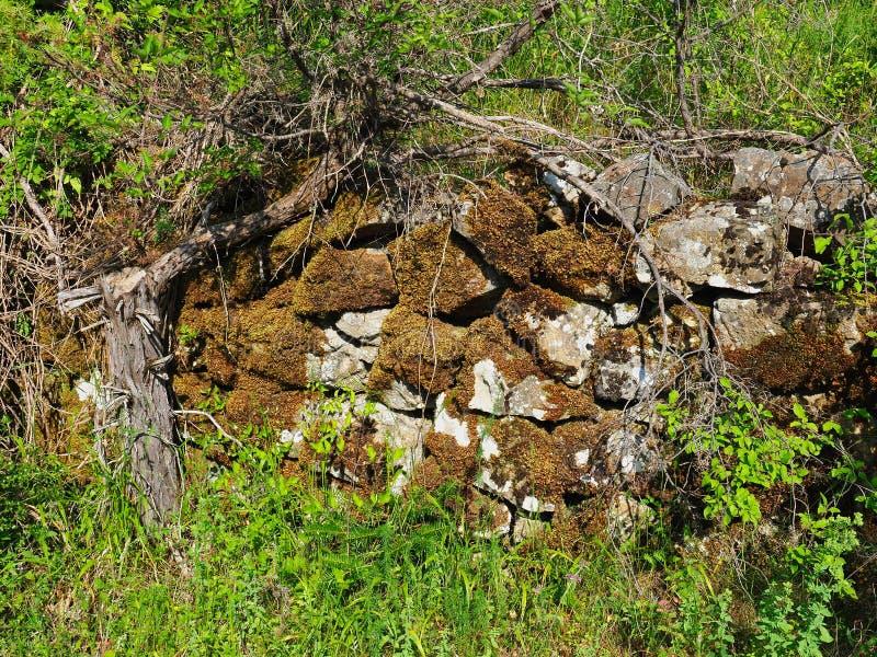 Trockenes Moos auf alter Bruchstein-Stützmauer, Griechenland lizenzfreies stockbild