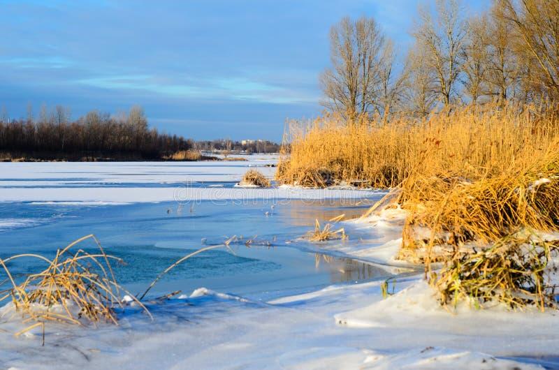 Trockenes Schilf auf einer Flussbank lizenzfreies stockfoto