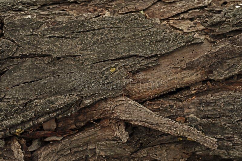 Trockenes Weibchen auf einem Baum lizenzfreie stockbilder