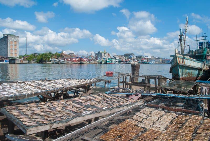 Trockenfisch am Bootshafen lizenzfreies stockfoto