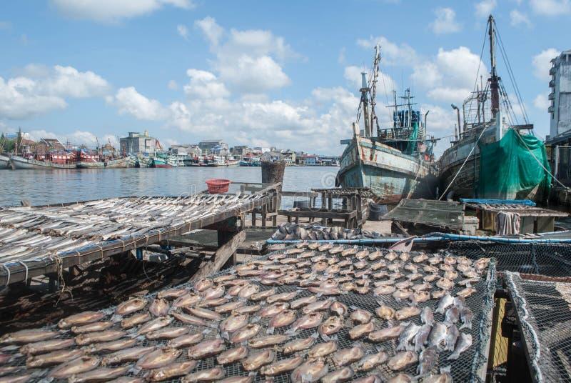 Trockenfisch am Bootshafen stockbild