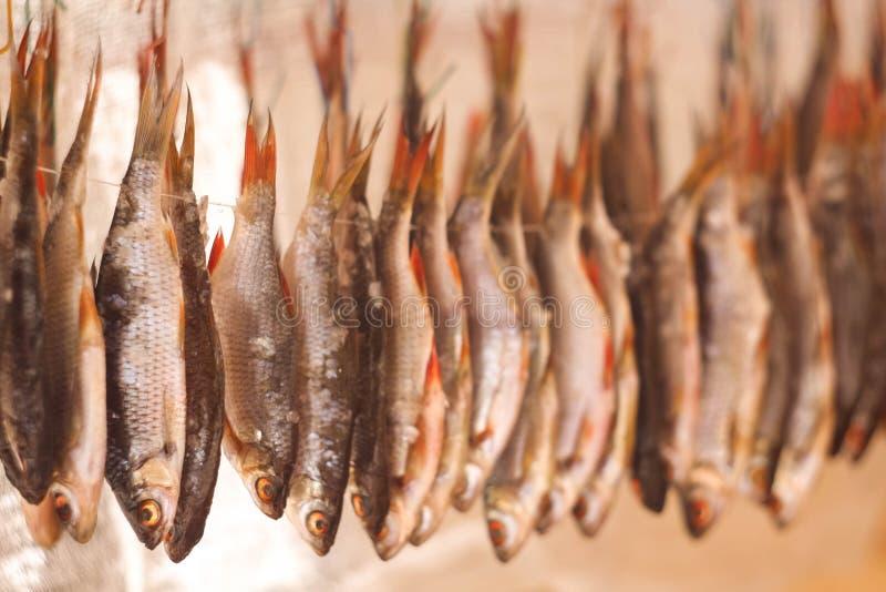 Trockenfisch in der Sonne lizenzfreie stockfotografie