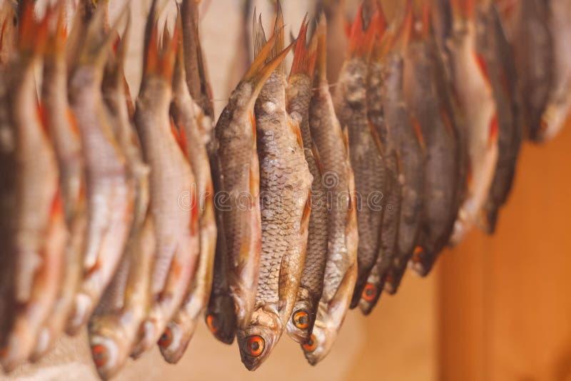 Trockenfisch in der Sonne lizenzfreies stockfoto