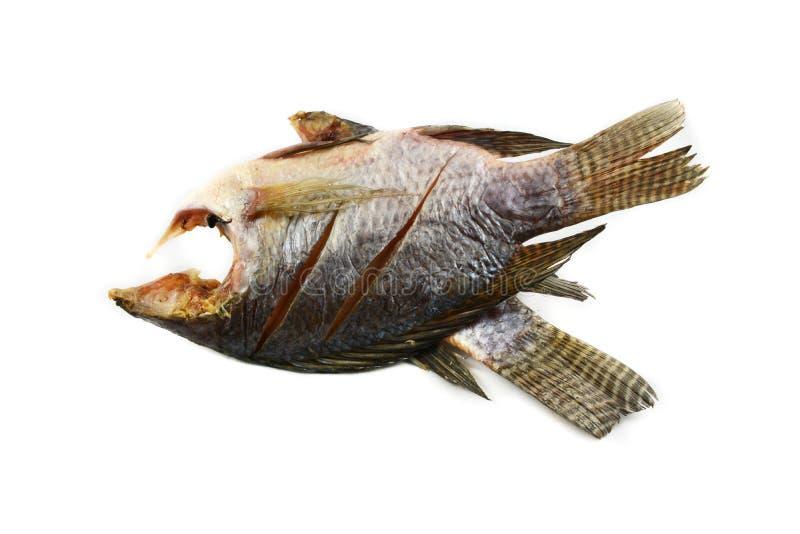 Trockenfisch Tilapia lizenzfreie stockfotografie