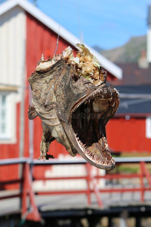Trockenfischkopf, Norwegen stockfotos