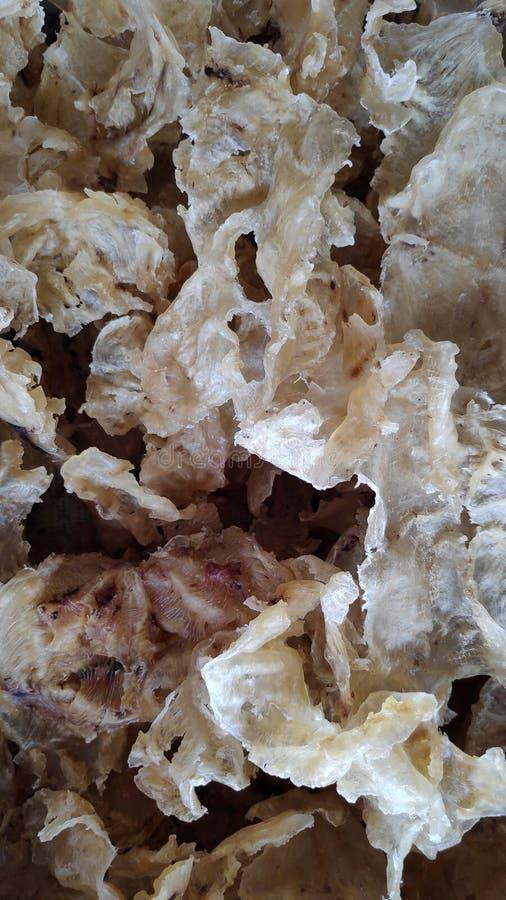 Trockenfischschlund oder -blase eine Zartheit in der chinesischen Küche lizenzfreie stockbilder