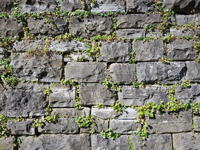 Trockenmauer mit Anlagen lizenzfreie stockbilder