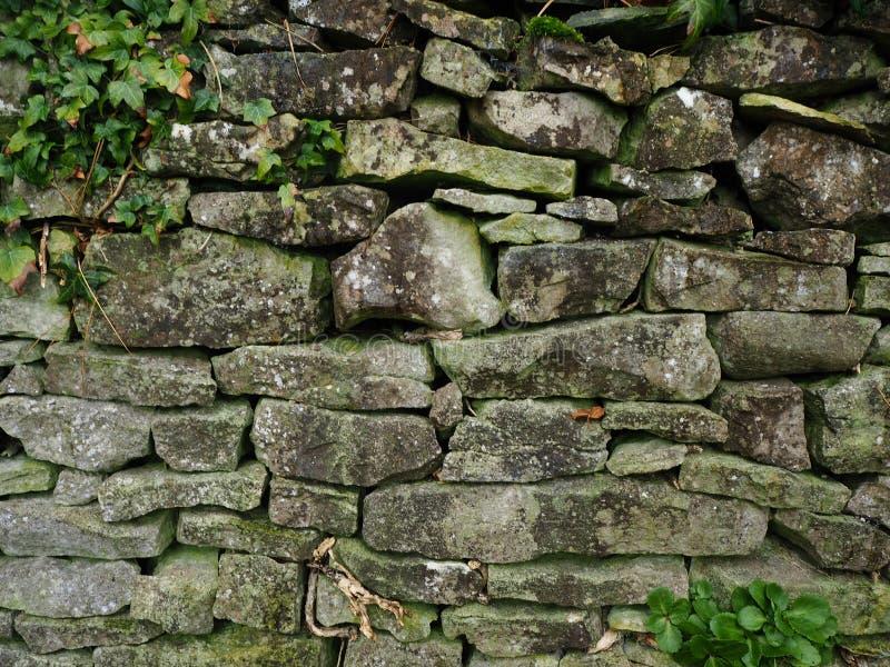 Trockenmauer mit Moos und Efeu lizenzfreie stockfotos