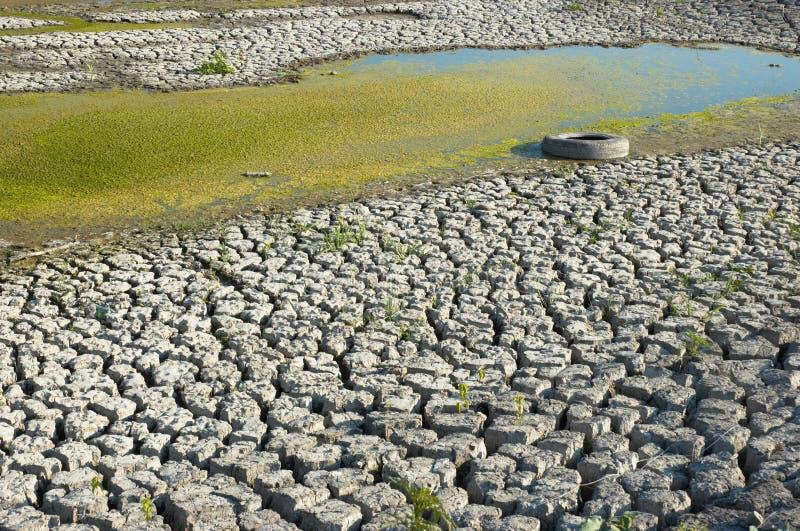 Trocknen des vergeudeten Sumpfs stockfotos