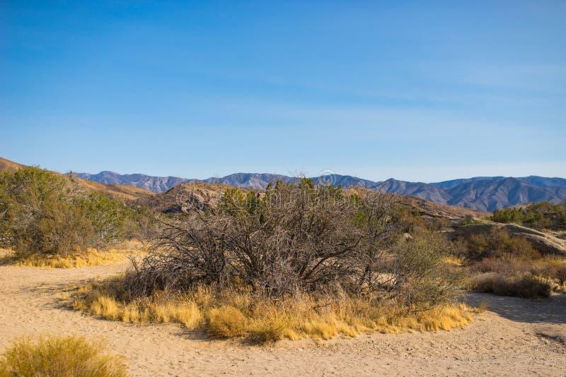 Trocknen Sie Bürste in der Mojave-Wüste lizenzfreie stockfotos