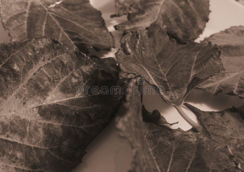 Trocknen Sie Blätter lizenzfreie stockbilder