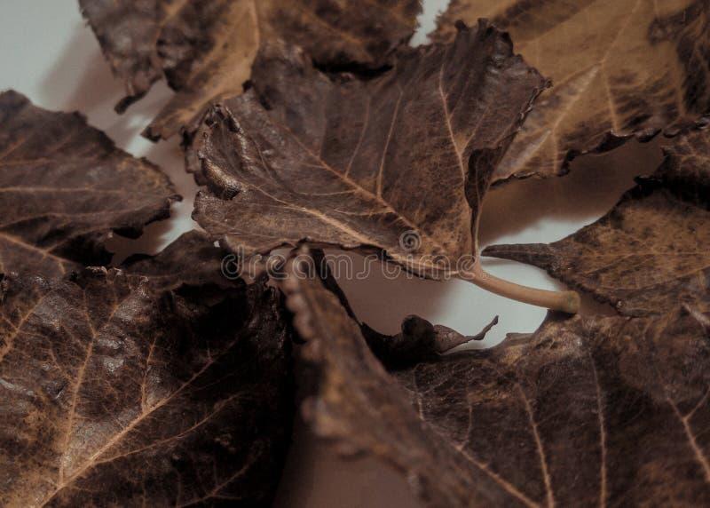 Trocknen Sie Blätter lizenzfreie stockfotografie