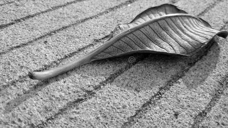 Trocknen Sie Blätter stockfoto