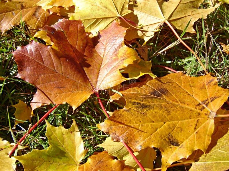 Trocknen Sie Blätter stockbild