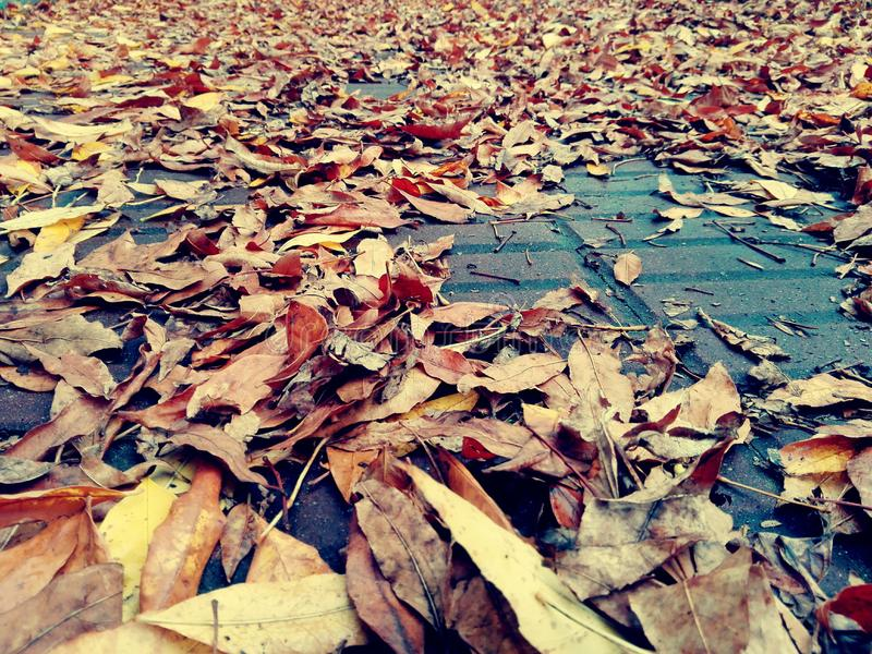 Trocknen Sie Blätter auf Bürgersteig stockfotos