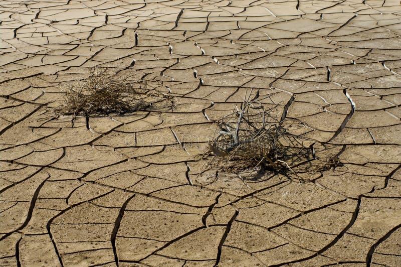 Pflanzen Trocknen trocknen sie gebrochenen boden und pflanzen sie stockfoto bild