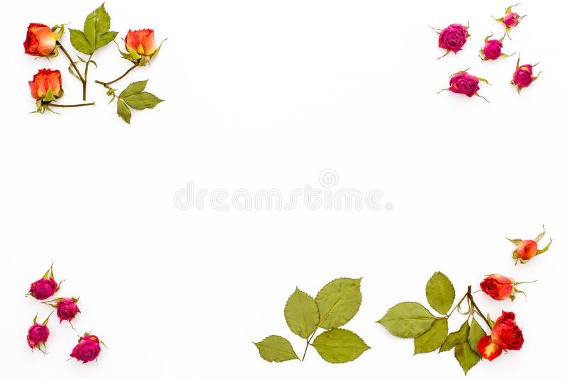 Trocknen Sie rosafarbene Blumen und Niederlassungen mit Blättern in den Ecken auf einem weißen Hintergrund Feld der Blume mit lee lizenzfreie stockfotos