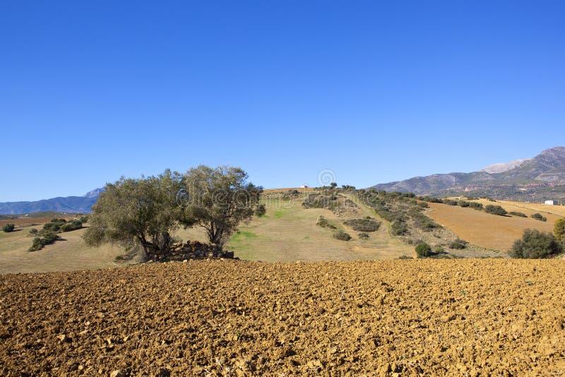 Trocknen Sie spanisches Ackerland in den Bergen von Andalusien stockfotografie
