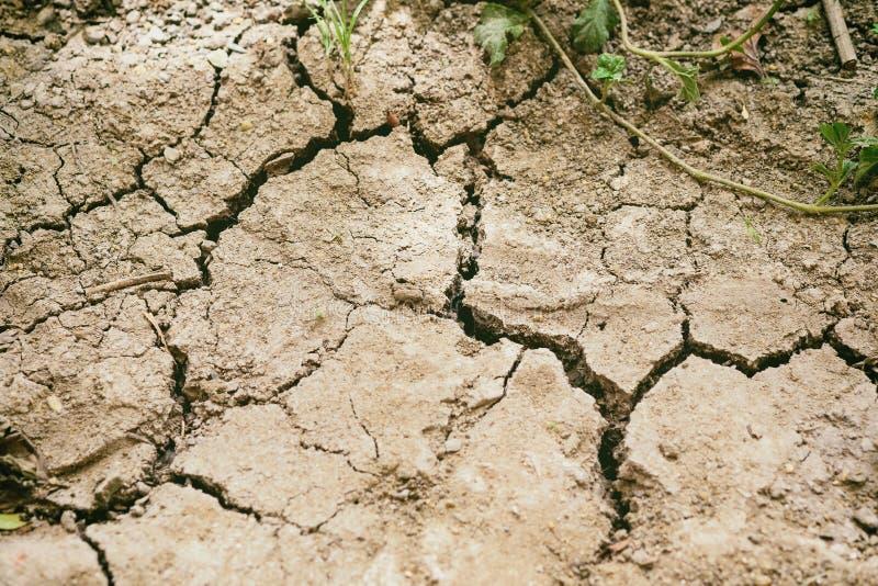 Trocknen Sie trockenen Boden, der im Sommer wächst nicht Ernten entwässert wird stockfoto